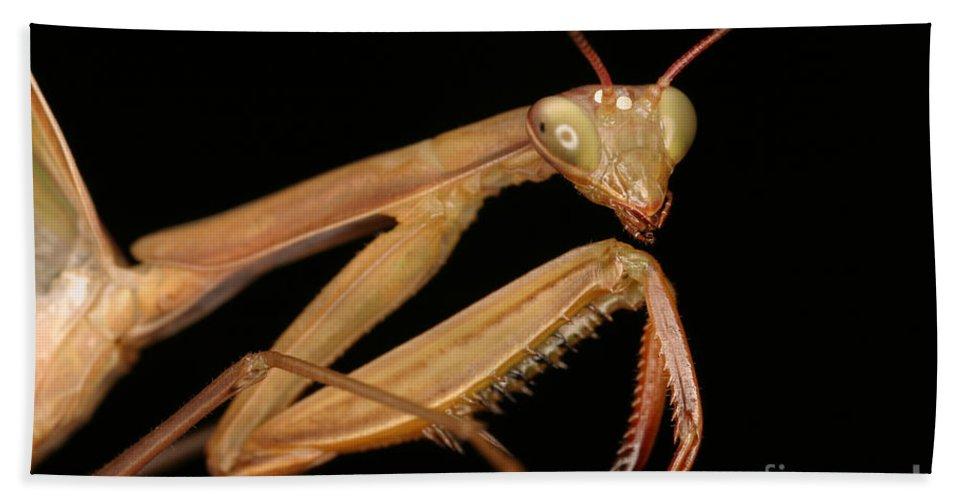 Praying Mantis Hand Towel featuring the Praying Mantis by Ted Kinsman