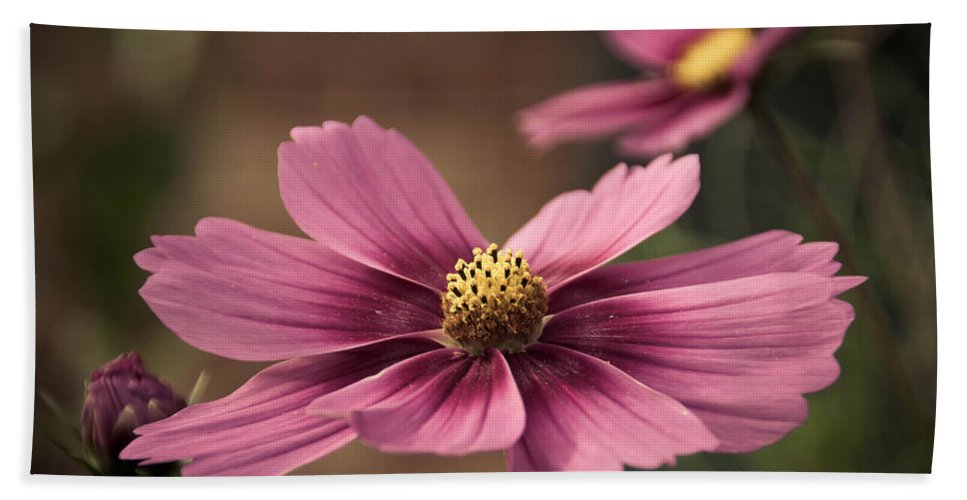 Petal Bath Sheet featuring the photograph Precious Pink by Trish Tritz