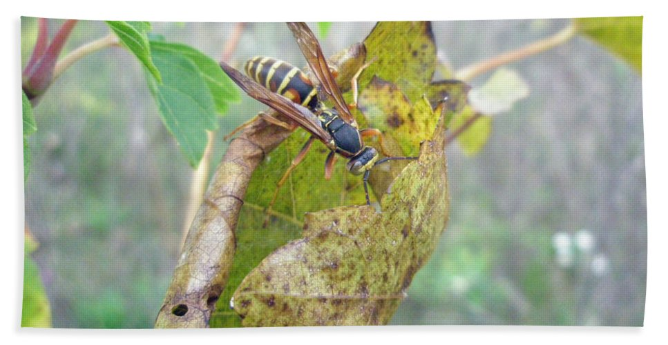 Wasp Hand Towel featuring the photograph Predatory Wasp Hunts Spider by Mother Nature