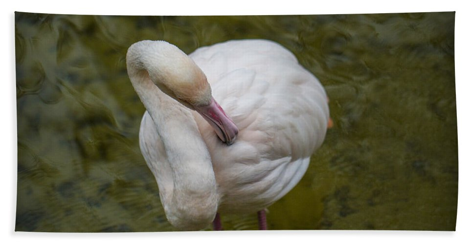 Clare Bambers Hand Towel featuring the photograph Preening. by Clare Bambers