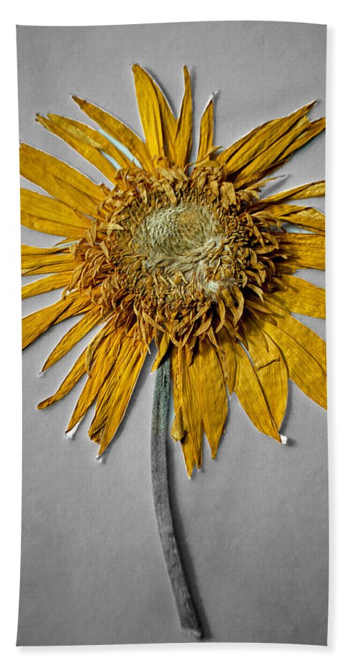 Pressed Hand Towel featuring the photograph Pressed Sunshine Flower by Tikvah's Hope