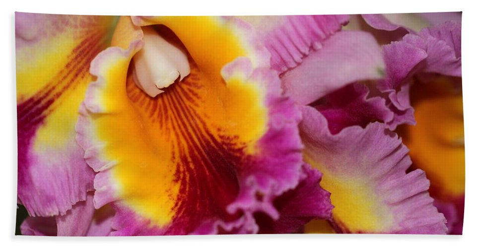 Orchid Hand Towel featuring the photograph Pretty And Colorful Orchids by Sabrina L Ryan