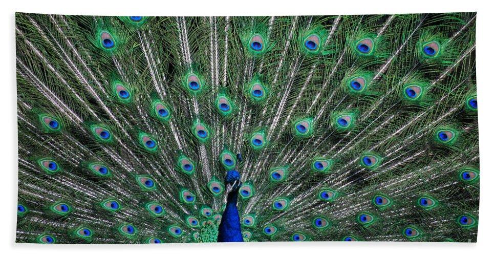 Peacock Bath Sheet featuring the photograph Pretty As A Peacock by Grace Grogan