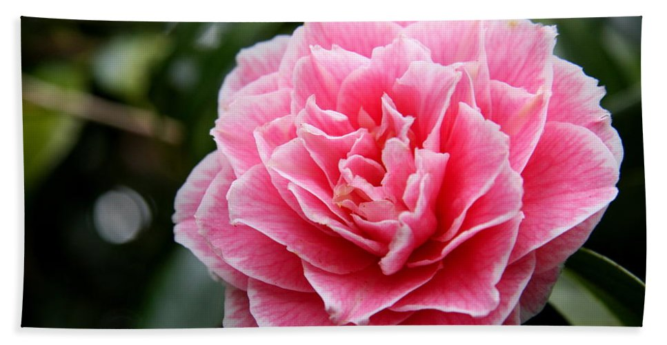 Camellia Hand Towel featuring the photograph Pretty Belinda by Christiane Schulze Art And Photography