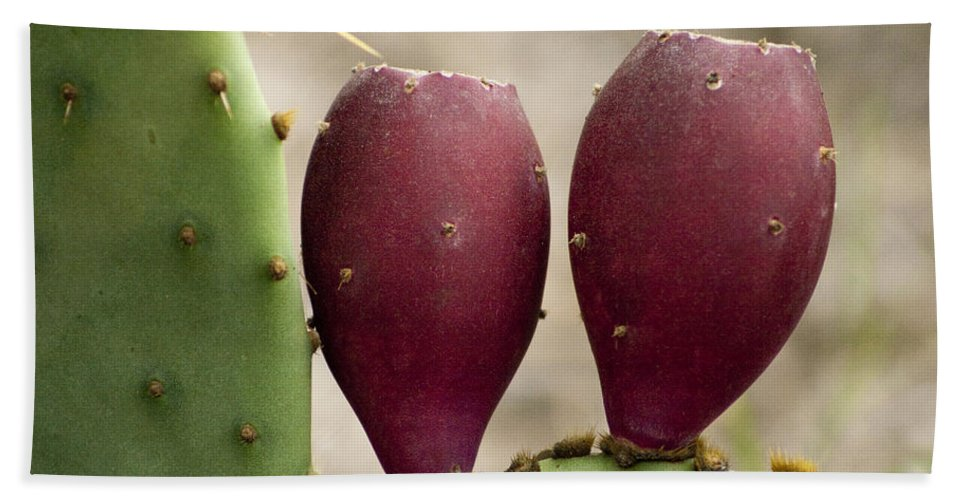Opuntia Engelmannii Hand Towel featuring the photograph Prickly Pear Cactus Fruit by Kathy Clark