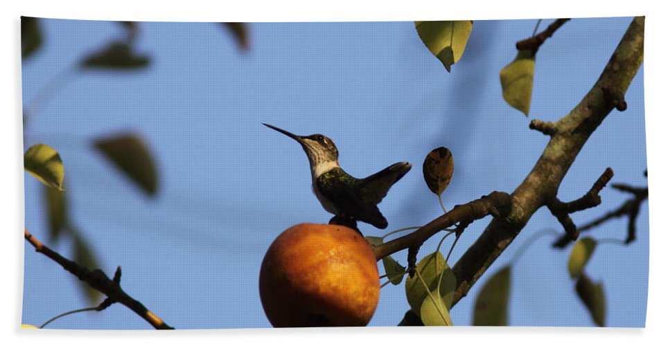 Hummingbird Bath Sheet featuring the photograph Private Reservoir by Travis Truelove