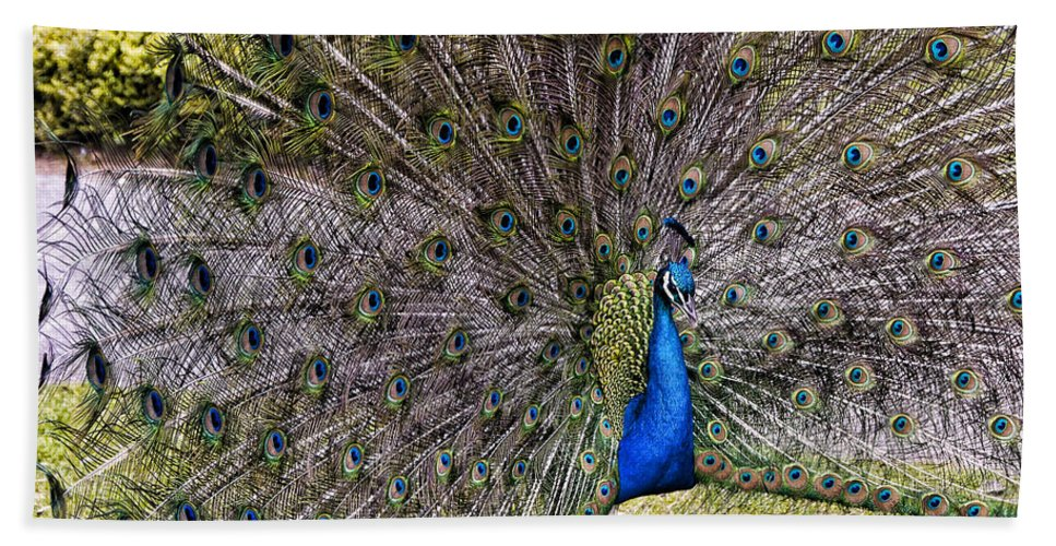 England Hand Towel featuring the photograph Proud Peacock At Leeds Castle by Jon Berghoff