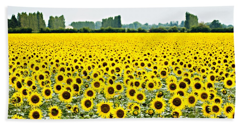 Sunflowers Bath Sheet featuring the photograph Provencial Sunflowers by Beth Riser