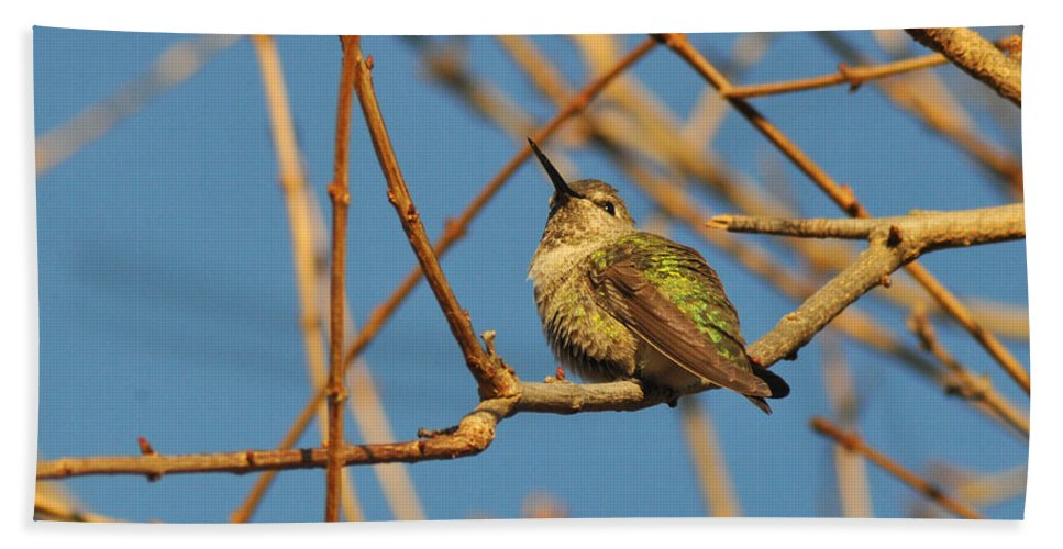 Hummers Bath Sheet featuring the photograph Pudge 2 by Lynn Bauer