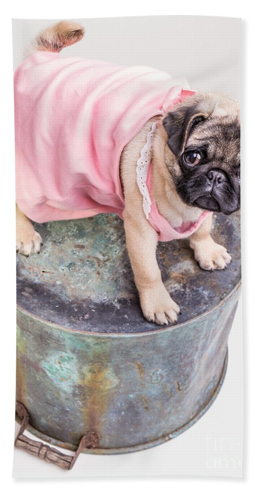 Pug Hand Towel featuring the photograph Pug Puppy Pink Sun Dress by Edward Fielding