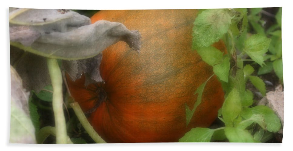 Nature Bath Sheet featuring the photograph Pumpkin On The Vine by Smilin Eyes Treasures