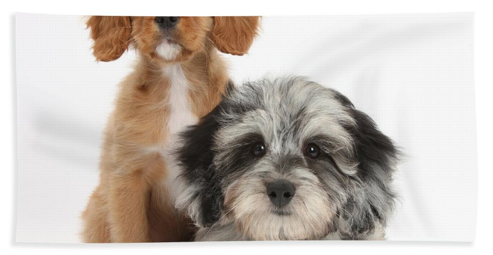 Nature Hand Towel featuring the photograph Puppies by Mark Taylor