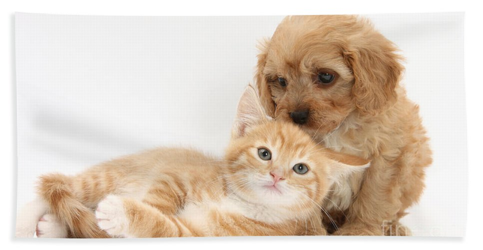 Animal Hand Towel featuring the photograph Puppy And Kitten by Mark Taylor