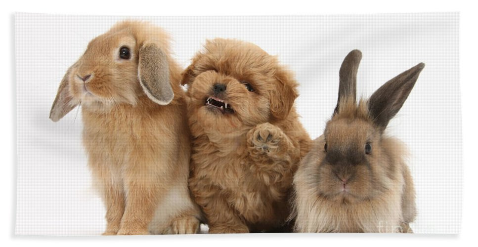 Animal Hand Towel featuring the photograph Puppy And Rabbits by Mark Taylor