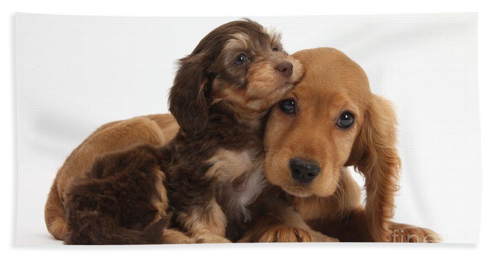 Nature Hand Towel featuring the photograph Puppy Love by Mark Taylor