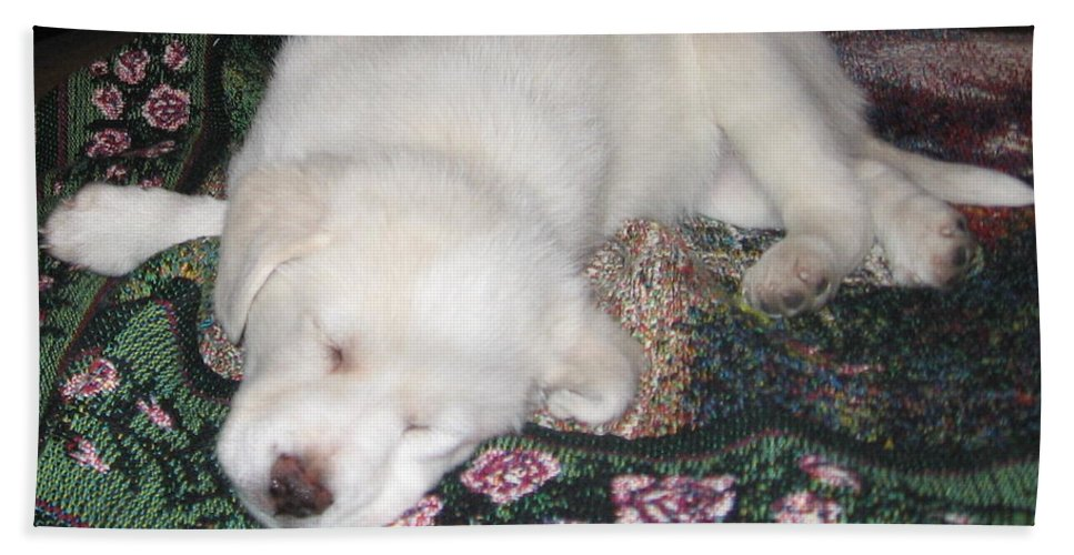 Labrador Hand Towel featuring the photograph Puppy Nap by Amy Hosp