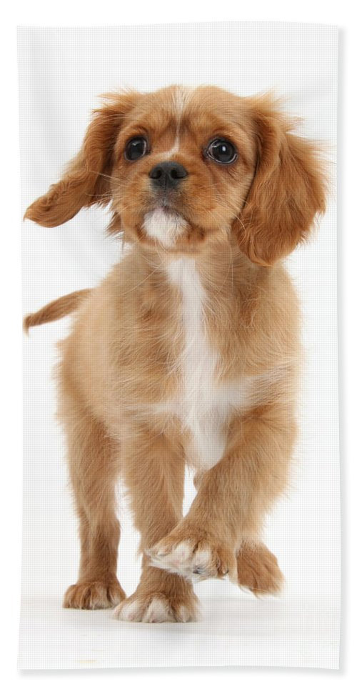 Nature Hand Towel featuring the photograph Puppy Trotting Foward by Mark Taylor