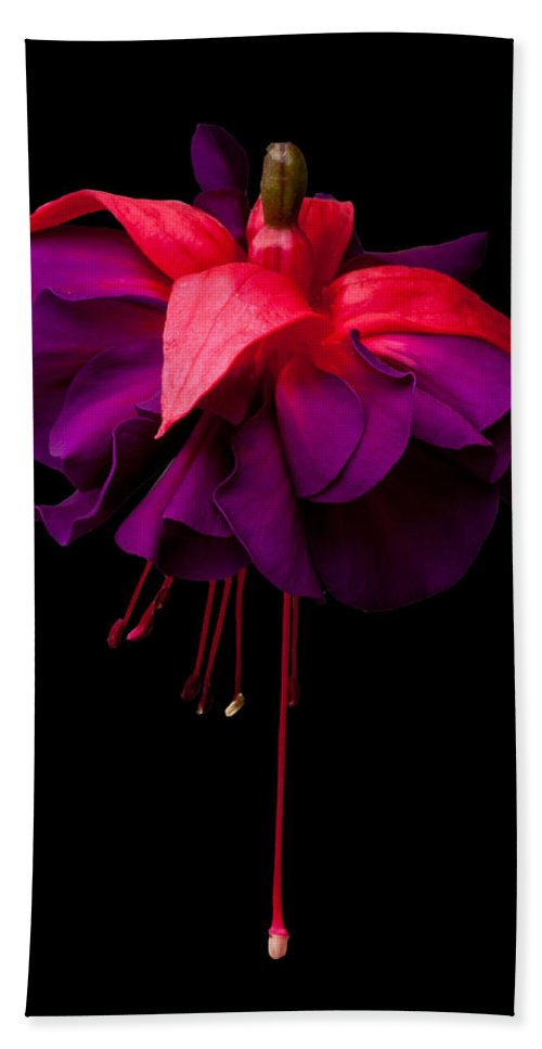 Fuchsia Bath Sheet featuring the photograph Purple And Pink Beauty by Dawn OConnor