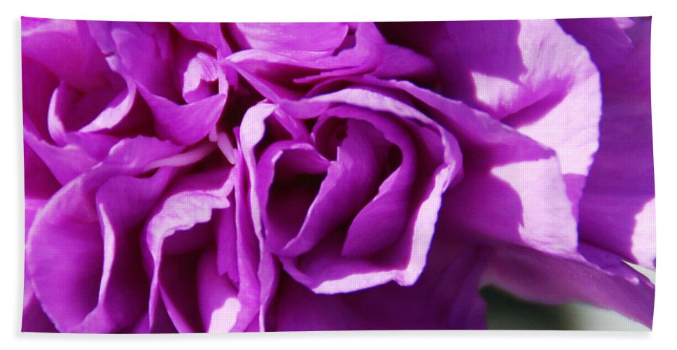 Flower Hand Towel featuring the photograph Purple Carnation by Aimee L Maher ALM GALLERY