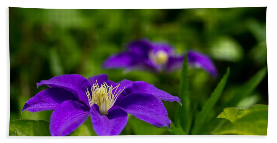 Bloom Hand Towel featuring the photograph Purple Clematis Flower by Lori Coleman