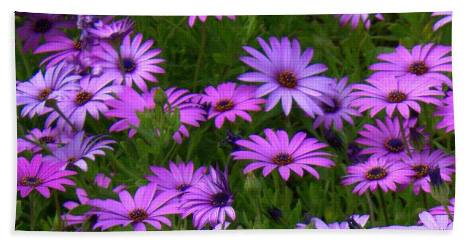 Purple Daisies Bath Sheet featuring the photograph Purple Daisies Square by Carol Groenen