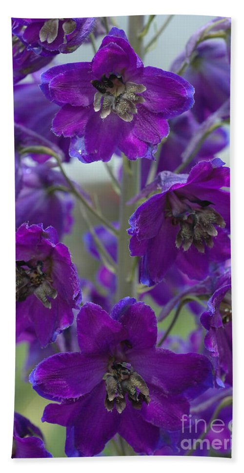 Purple Bath Sheet featuring the photograph Purple Flowers by Mike Nellums