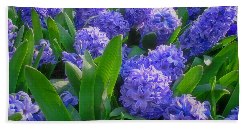 Purple Hyacinths Hand Towel featuring the photograph Purple Hyacinths by Greg Matchick