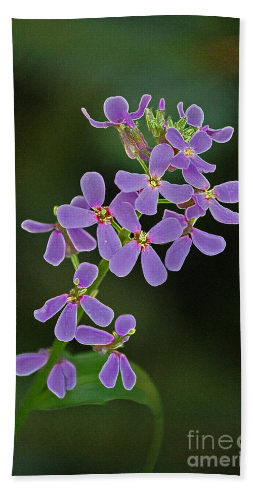 First Star Art By Jrr Hand Towel featuring the photograph Purple Joy by First Star Art