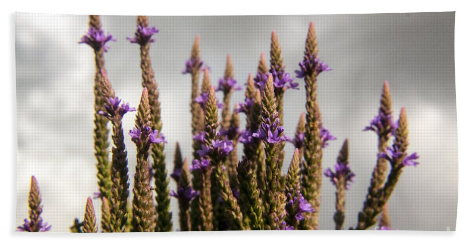 Wildflower Hand Towel featuring the photograph Purple Wildflowers by Darleen Stry