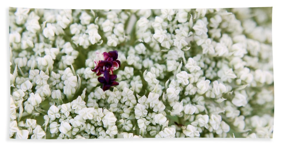 Queen Anne's Lace Hand Towel featuring the photograph Queen Anne's Lace by Angie Rea
