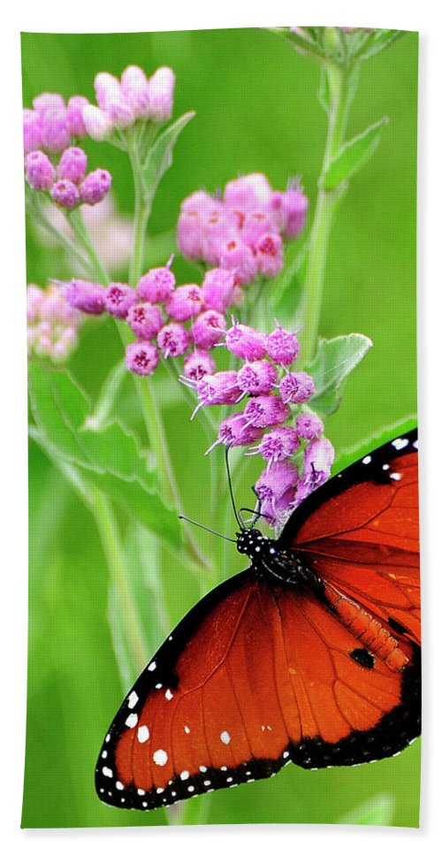 Queen Butterfly Hand Towel featuring the photograph Queen Butterfly And Pink Flowers by Bill Dodsworth