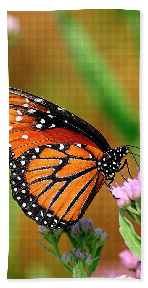 Queen Buterfly Hand Towel featuring the photograph Queen Butterfly by Bill Dodsworth