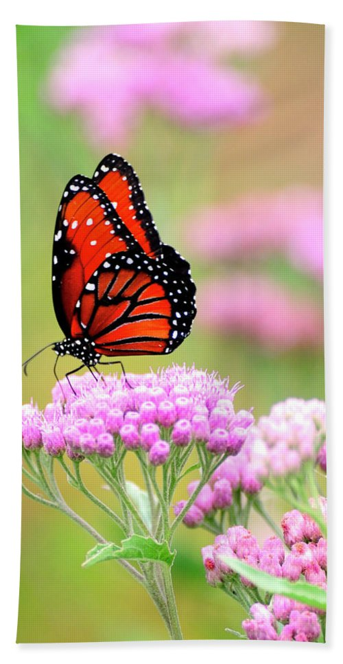 Queen Butterfly Hand Towel featuring the photograph Queen Butterfly Sitting On Pink Flowers by Bill Dodsworth