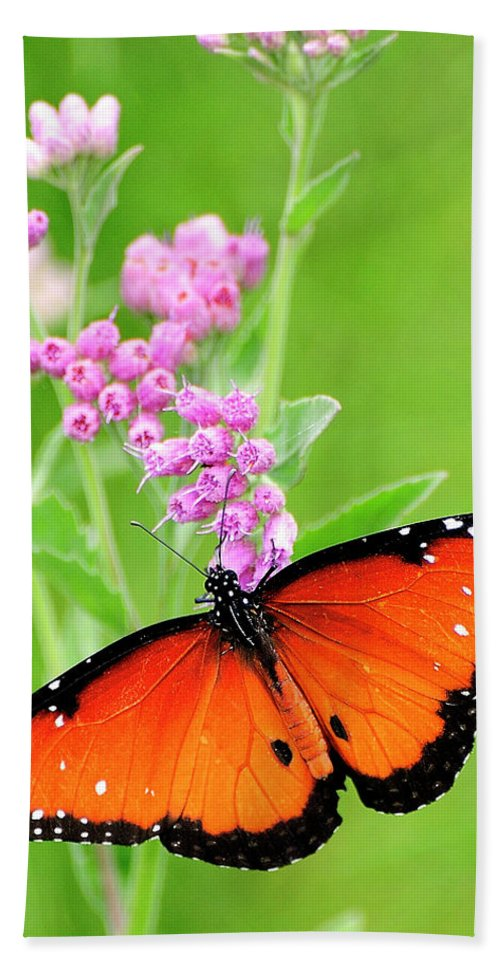 Queen Butterfly Hand Towel featuring the photograph Queen Butterfly Wings With Pink Flowers by Bill Dodsworth