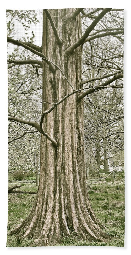 Tree Winter Leafless Bath Sheet featuring the photograph Quiet Tree by Alice Gipson
