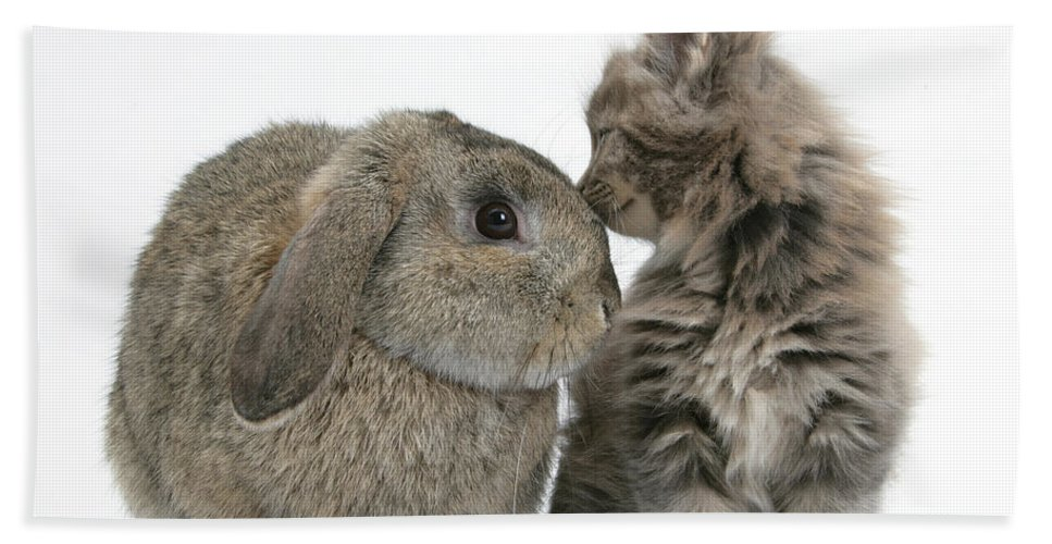 Animal Hand Towel featuring the photograph Rabbit And Kitten by Mark Taylor