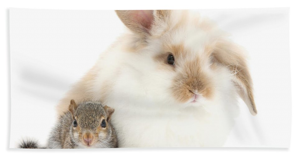 Nature Hand Towel featuring the photograph Rabbit And Squirrel by Mark Taylor