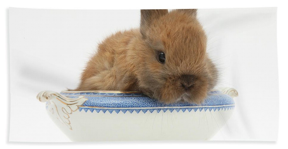 Nature Hand Towel featuring the photograph Rabbit In A China Bowl by Mark Taylor