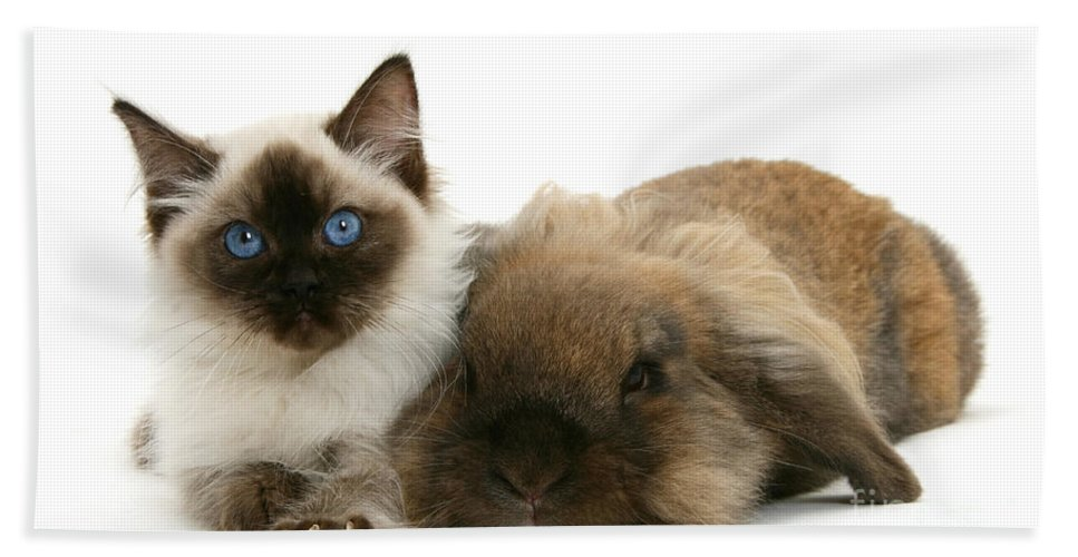 Nature Hand Towel featuring the Ragdoll Kitten And Lionhead Rabbit by Mark Taylor