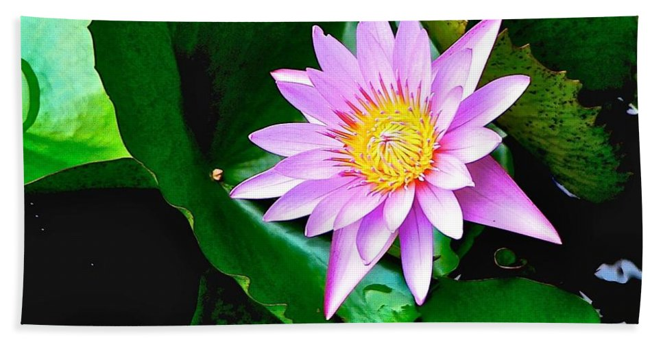 French Polynesia Hand Towel featuring the photograph Raiatea Waterlily by Eric Tressler