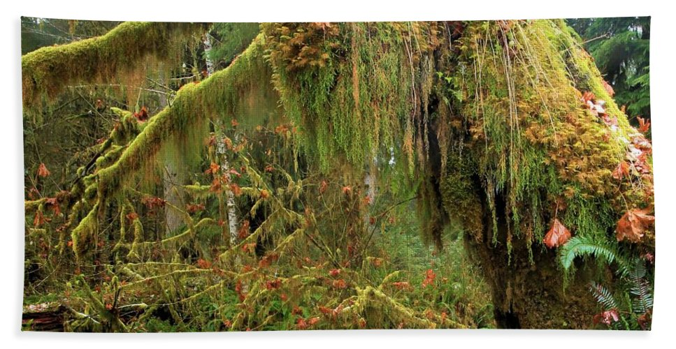 Hoh Rainforest Hand Towel featuring the photograph Rain Forest Crocodile by Adam Jewell