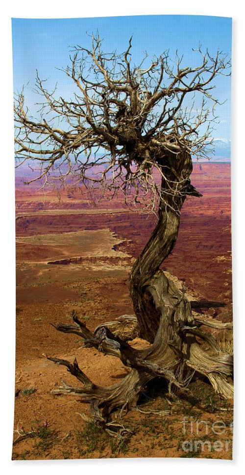 Canyonlands Hand Towel featuring the photograph Rainbow Canyon by Adam Jewell