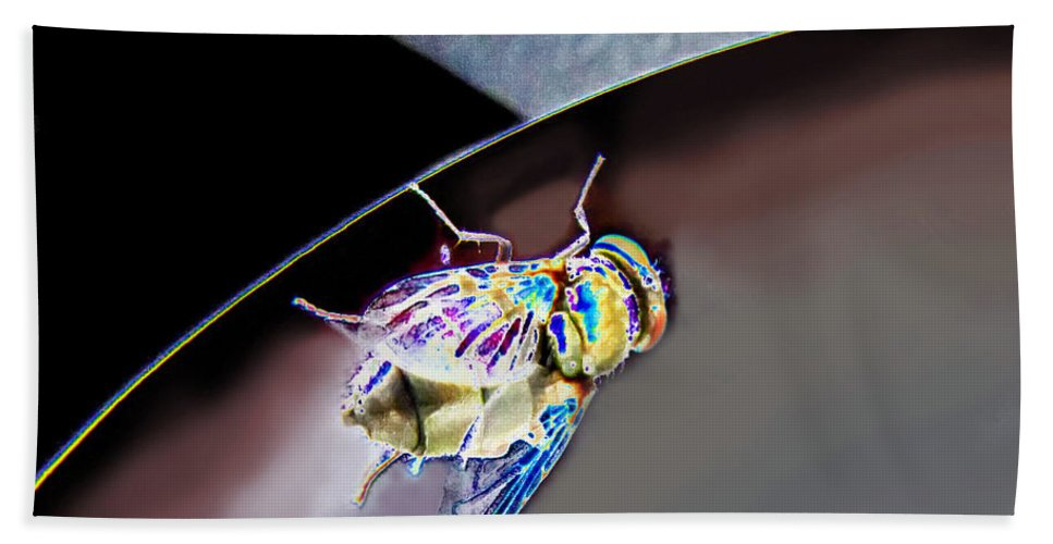 Nature Bath Sheet featuring the photograph Rainbow Fly by Debbie Portwood
