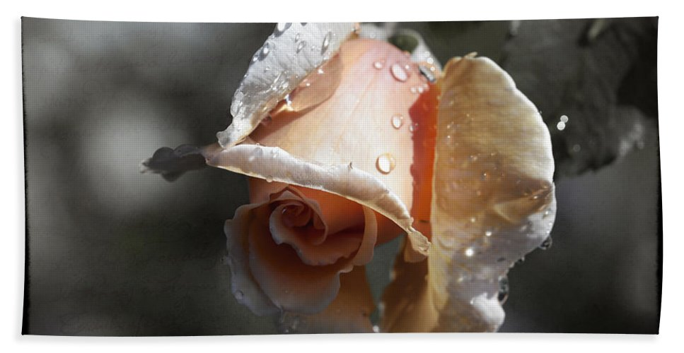 Florals Bath Sheet featuring the photograph Raindrops On Roses by Linda Dunn