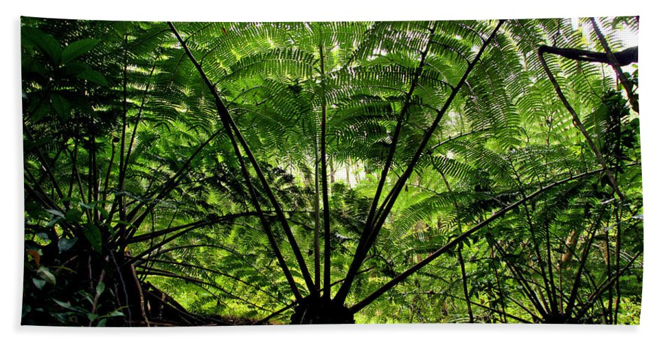 Manoa Hand Towel featuring the photograph Rainforest Backlight by Kevin Smith