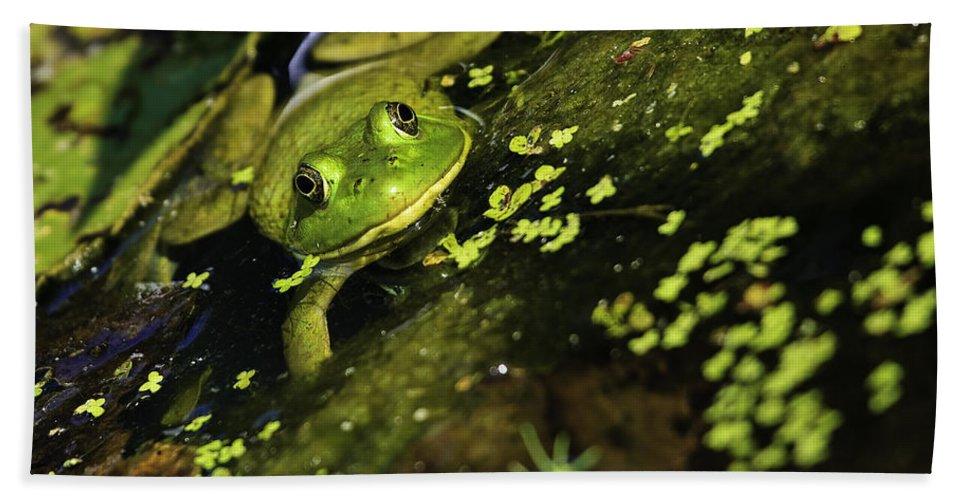 Green Frog Bath Sheet featuring the photograph Rana Clamitans Or Green Frog by Perla Copernik