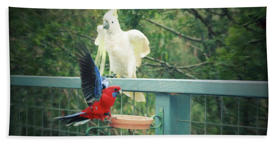 Birds Hand Towel featuring the photograph Raucous At The Feeding Bowl by Douglas Barnard