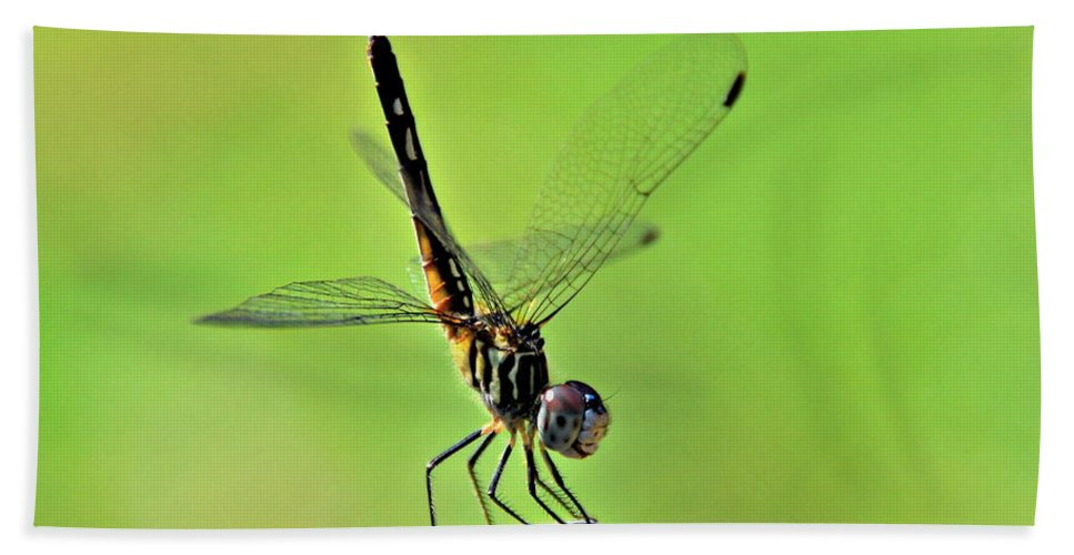 Dragonfly Bath Sheet featuring the photograph Ready For Departure by Floyd Menezes