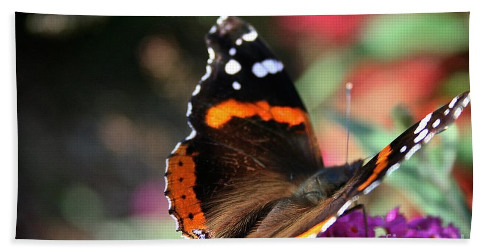 Outdoors Bath Sheet featuring the photograph Red Admiral by Susan Herber
