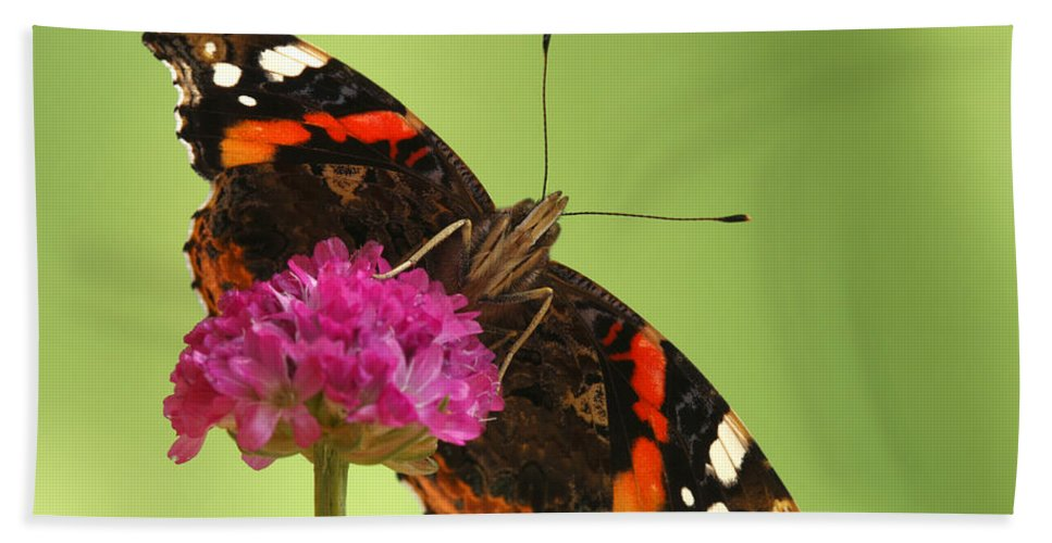 Fn Hand Towel featuring the photograph Red Admiral Vanessa Atalanta by Silvia Reiche